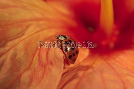 heute auf unserem hibiskus entdeckt