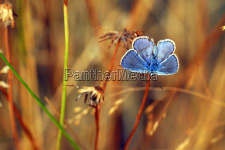 blauer fleck