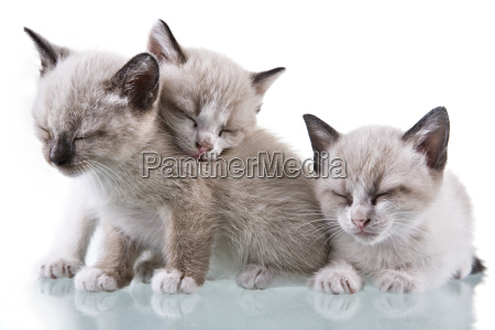 baby-kätzchen-schlafen - 1344753
