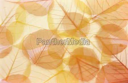 trockene farbige blaetter hintergrund