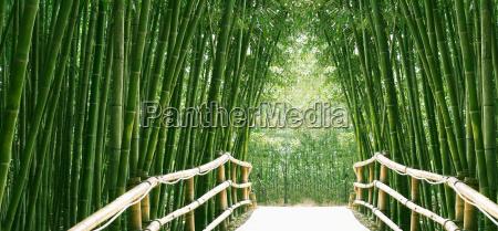 bambus allee