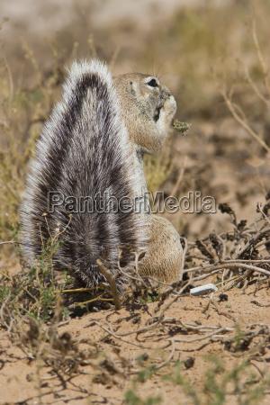 feeding squirrel