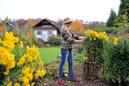 blumenpflege im herbstgarten