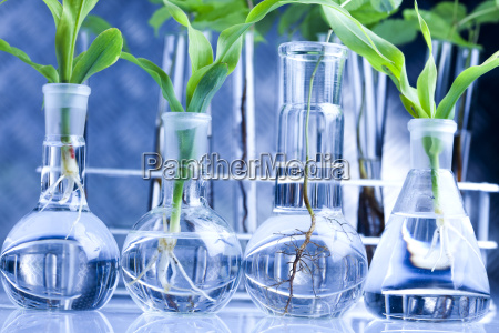 floral science in laboratory