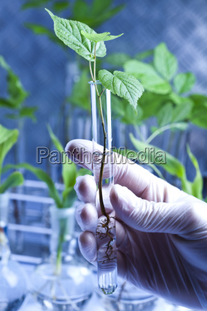 plant growing in test tubes in