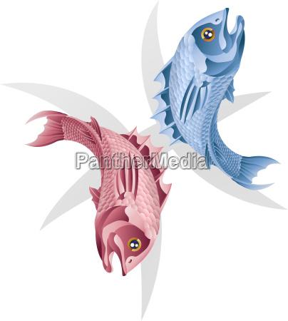 fische der fisch sternzeichen