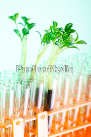 lab experiment with green seedlings