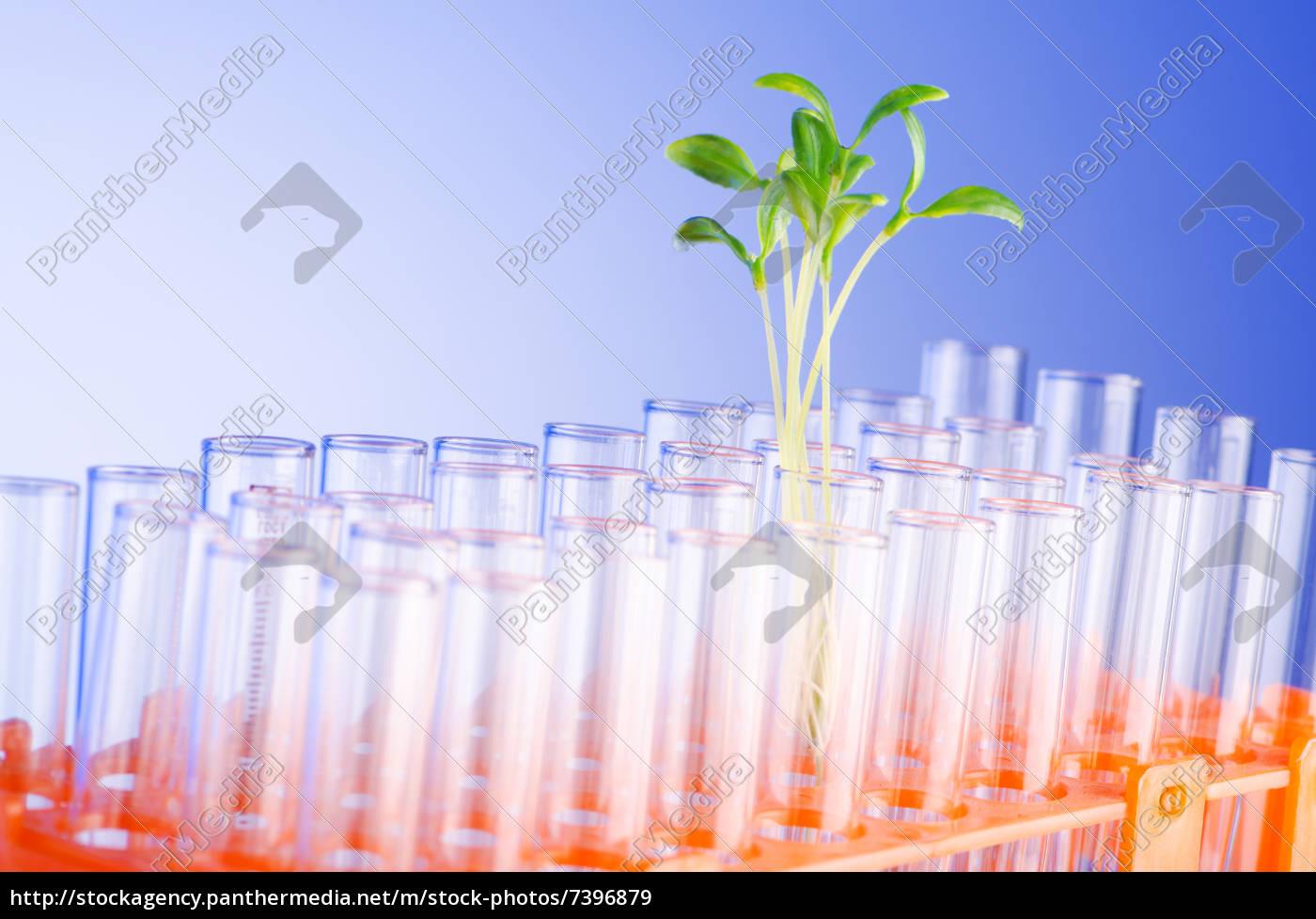 lab, experiment, mit, grünen, keimlingen - 7396879