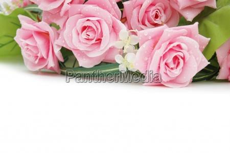 rosen auf dem weissen verwenden