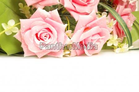 rosen im hintergrund und platz fuer