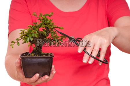 frau schneidet einen bonsai baum in
