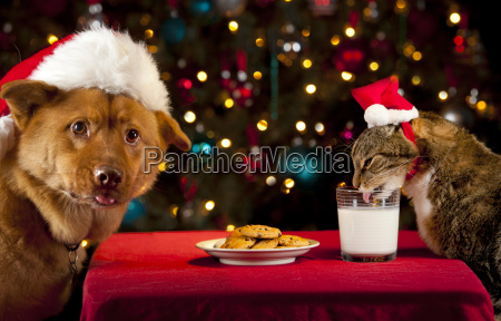 cat and dog taking over santas