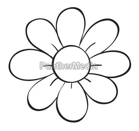 a flower sketch