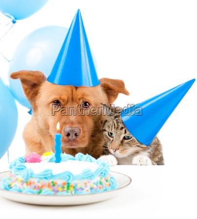 pet birthday party