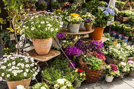 blumenladen flower shop