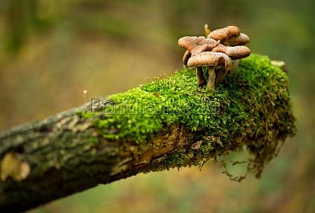 pilzfamilie auf einem stueck holz