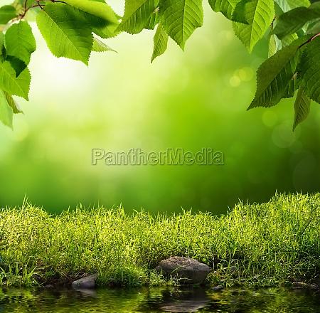 gruene natur als hintergrund