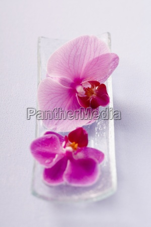 lifestyle well being well being flower