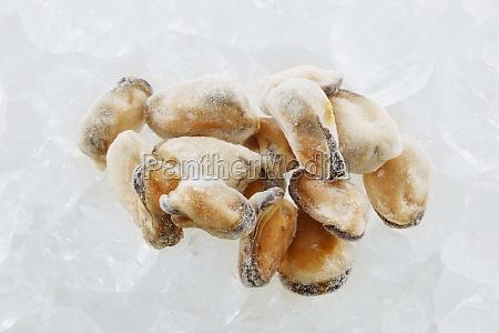 food aliment mollusc frozen series raw