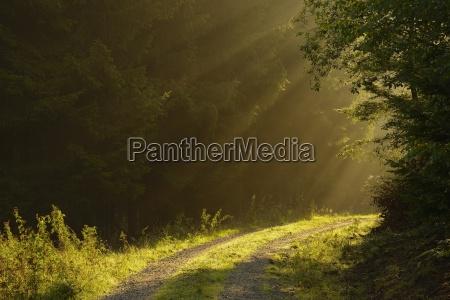 stimmung lichtstrahl draussen sonnenstrahl fotografin fotografieren