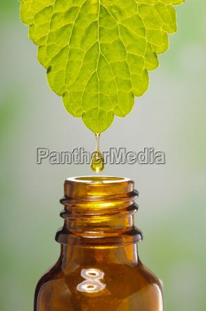 alternativmedizin mit extrakt einer heilpflanze