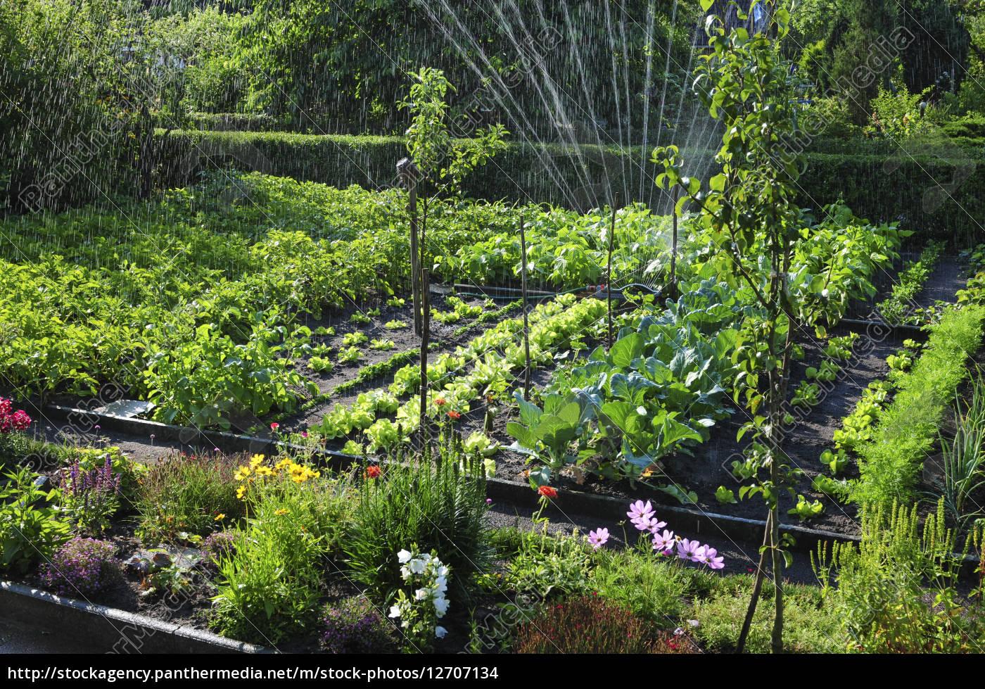 natur wasser garten obst pflanzen gemüse frucht kräuter - stock, Garten und bauen