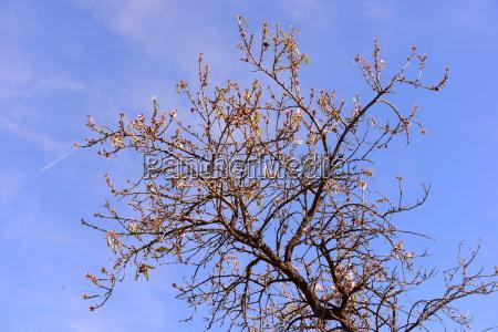 die ersten mandelblueten in spanien