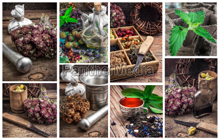 collage with the collected harvest medicinal