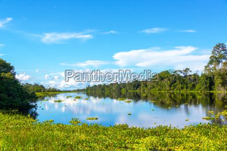 amazon jungle view and reflection