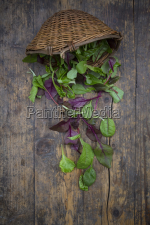 wickerbasket and different organic lettuce leaves