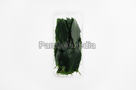 herbs in container on white background