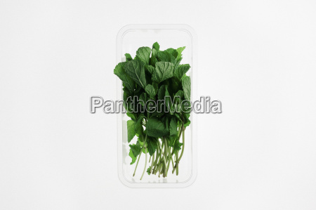 directly above shot of herbs in