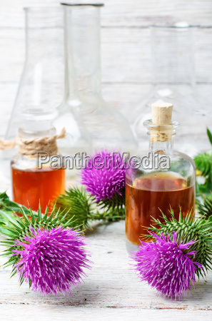 flower thistles and extract from it