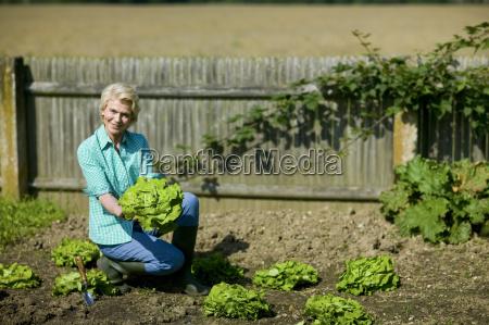 senior woman picking lettuce