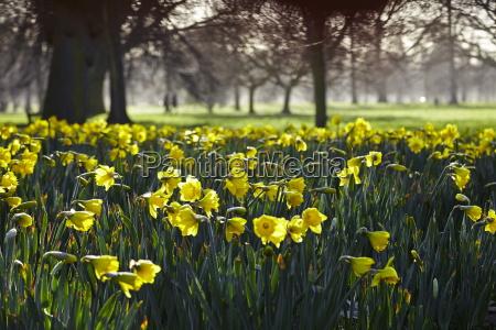 hyde park london england united kingdom