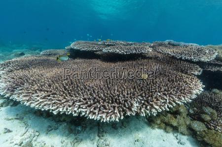 underwater reef system on pink sand
