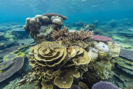 underwater reef on a remote small