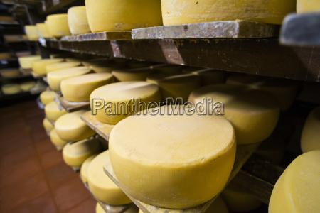 cheese maturing on a traditional ecuadorian