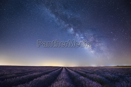 france provence lavender fields with milky