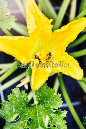 einschlag blatt baumblatt blume pflanze gewaechs