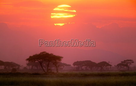 savanna landschaftamboseli national parkkenia