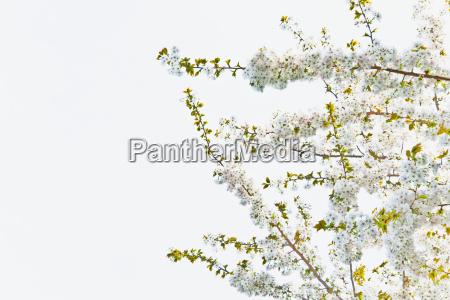 blatt baumblatt baum ast zweig outdoor