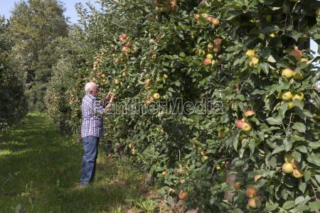 senior man examining fruits on an