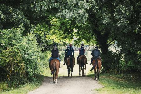 rueckansicht von vier reitern auf pferden