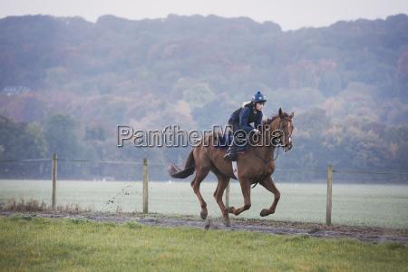 frau frauen sport weiblich pferd ross