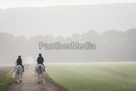 freizeit sport pferd ross tier saeugetier