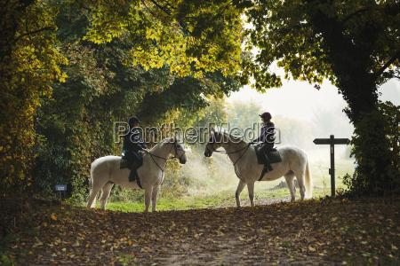 freizeit sport baum pferd ross tier