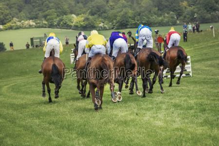 sport pferd ross tier saeugetier braun