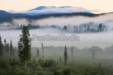 farbe baum baeume nationalpark nebel horizontal
