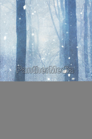 germany wuppertal man in winter forest